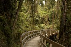 Hokitika Gorge Walk, West Coast, New Zealand. It is wheelchair accessible to a dramatic viewpoint. New Zealand Adventure, New Zealand Travel, Banff National Park, National Parks, New Zealand Holidays, Holiday Places, Honeymoon Ideas, Snow Skiing, South Island