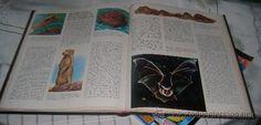 Enciclopedias de segunda mano: naturalia enciclopedia ecologica de las ciencias naturales año 1965 (5 tomos) - Foto 8 - 28985342
