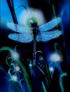 """Dragonflies. This picture reminds me of """"My Secret Garden"""" for some reason. <3"""
