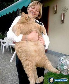 Fat Cats in the Animal World (19 Images)