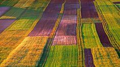An organic farm in the Roztocze region of Poland (© Marek Piotrowski/Alamy) – 2015-07-18  [http://www.bing.com/search?q=Roztocze&form=hpcapt&filters=HpDate:%2220150718_0700%22]