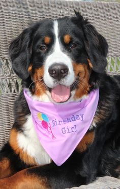 Boy Birthday Dog Bandana Sizes XS to Large Pick a Fabric & Design. $8.50, via Etsy.