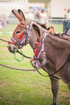 Donkey Rides at Family Fun Day at Chester Racecourse