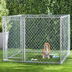 Archie & Oscar™ Abigail Steel Yard Kennel & Reviews | Wayfair Lucky Dog Kennel, Rustic Dog Houses, Pet Resort, Wood Dog, Pet Cage, Large Dog Breeds, Large Animals, Small Dogs, Best Dogs