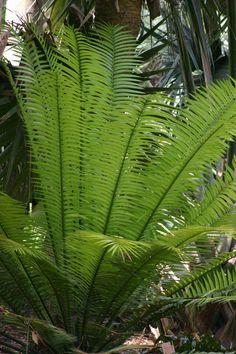 Palm Fairchild Tropical Garden