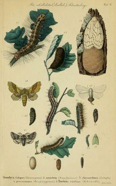 Die Waldverderber und ihre Feinde oder Beschreibung und Abbildung : - Biodiversity Heritage Library