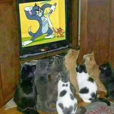 Cats Watching TV Tom Jerry | Funny Joke Pictures