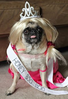 Honey Boo Pig, Halloween 2012. Pork went drag this year and dressed as Honey Boo Boo. Please don't judge me. HA!