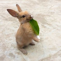 a bunny with a leaf in her mouth
