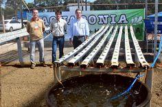 O sistema Aquapônico foi apresentado aos produtores rurais durante a Agrishow 2014 pelos pesquisadores da APTA e agrônomos da CATI.