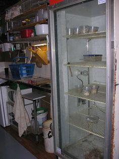 Gecko Dan Incubators/Kitchen
