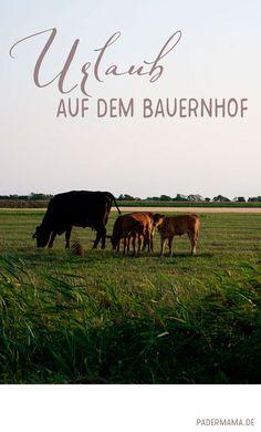 Urlaub auf dem Bauernhof - mit Nordsee � padermama.de Travel Guide, Germany, Movie Posters, Berlin, Group, Board, Casual, Blog, Europe