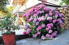 100+- Καλημέρες σε όμορφες εικόνες με λόγια....giortazo.gr - Giortazo.gr Good Morning Messages, Floral Wreath, Wreaths, Plants, Good Morning Wishes, Floral Crown, Door Wreaths, Deco Mesh Wreaths, Plant