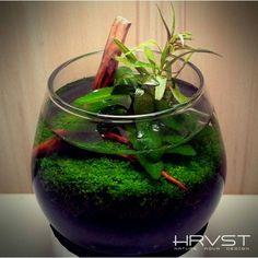 . Planted Aquarium, Aquarium Fish, Aquarium Aquascape, Aquascaping, Indoor Water Garden, Betta Fish Tank, Nano Tank, Paludarium, Fish Ponds