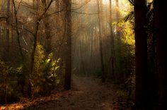In the middle of the forest... | Flickr - Photo Sharing! by Piotr Fil
