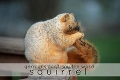 germans can't say the word squirrel.... oder?!