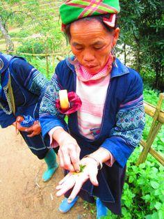 H'mong lady shows me the Indigo plant. Sapa, Vietnam. Gemma Lofthouse ©