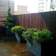 Topiary Evergreen Design, Pictures, Remodel, Decor and Ideas Bamboo Garden Fences, Backyard Garden Landscape, Backyard Privacy, Fence Landscaping, Large Backyard, Rooftop Garden, Backyard Fences, Pool Fence, Balcony Garden