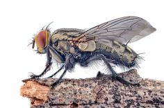 Denis Hogan: Lord of the Flies Insects, Bee, Lord, Honey Bees, Bees