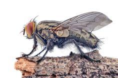 Denis Hogan: Lord of the Flies