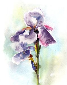 Watercolor Painting Art Print. Purple Irises by CanotStopPrints