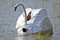 floating in my swan