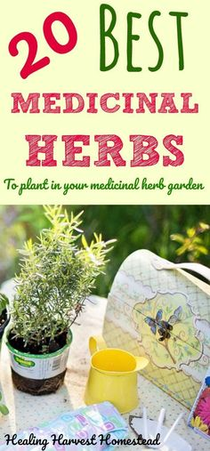 Having an herb garden filled with medicinal plants is a good idea if you want to be prepared. But what plants and herbs should you plant in your medicinal herb garden? If you are planning on planting an herbal medicine garden this Spring, here are the BEST 20 Medicinal Herbs to choose to get your garden prepared for emergencies. #MedicinalPlants #gardenplanning