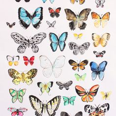 butterfly art scheduled via httpwwwtailwindappcomutm_source