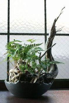 Moss Garden, Bonsai Garden, Garden Art, Garden Plants, Little Gardens, Small Gardens, House Plants Decor, Plant Decor, Container Plants
