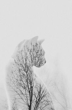 Double-exposure photo of my cat and trees