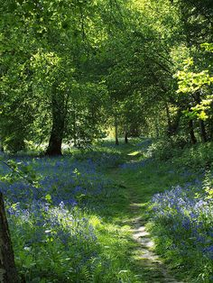 Ashenbank woods near Cobham in Kent [shared] Mother Earth, Mother Nature, Pasto Natural, Forest Bathing, Parks, Nature Aesthetic, English Countryside, Belleza Natural, Plant Design