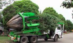 BioOrbis: Máquina Salvadora de Árvores?