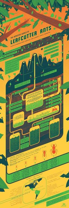 Leafcutter Ants Infographic Poster by Kevin Tong