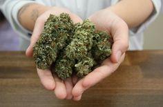 Marijuana a substitute for prescription drugs and alcohol: Study