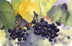 Earliest painting, by this artist, of grapes picked from the fields, placed on a picnic table, and painted. Touch of autumn, with wet-into-wet watercolor painting process.
