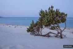 Sardegna | Flickr - Condivisione di foto!