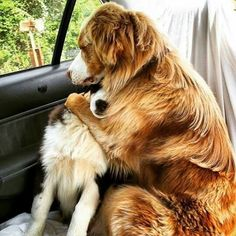 So sweet. ..they thought they were going to the vet,  but were actually headed to the park.