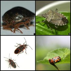 Overwintering Pest Control DIY Tips