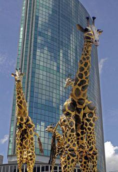 The Giraffe Stilt Walker
