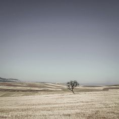 single tree - II by Ersin Türk on 500px