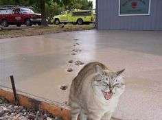 This just makes me laugh. Cat walks thru fresh concrete poured at the fire station and HE'S the one mad! HAHA