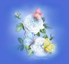 Providing Fine Art Prints, Graphic CD's, and Linkware graphics from my own original artwork with a variety of themes. Beautiful Flowers Pictures, Flower Pictures, Watercolor Disney, Watercolor Art, Penny Parker, Art Clipart, Butterfly Flowers, Vintage Roses, Beautiful Paintings