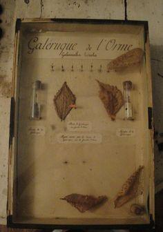 Antique French Curiosite box #2