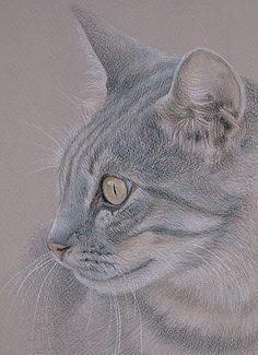 Color gato lápiz sobre papel Canson Mi-teintes.katrina-ann