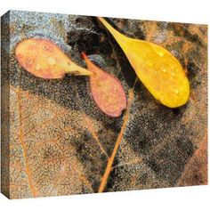 Dean Uhlinger Fall Impression 6 inch Gallery-Wrapped Canvas, Size: 36 x 48, Black