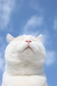 white cat and blue sky