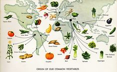 The History About Each Vegetable