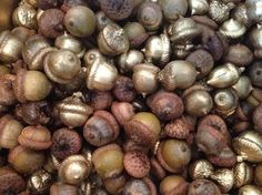 1000 images about clip acorn on pinterest acorn wreath for How to preserve acorns for crafts