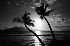 Sunset Photograph - Black And White Tropical by Pierre Leclerc Photography