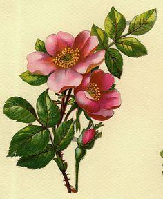 Kuvahaun tulos haulle vintage flowers wild rose